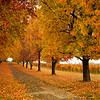 Fall Arrives
