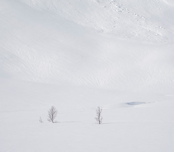 Trees in snowfields, Senja