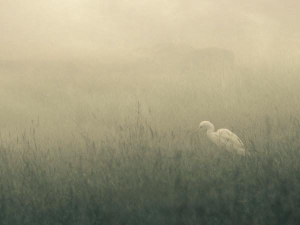 Bird In White