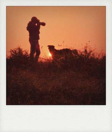 Dog & Sun