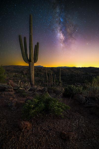 Sonoran Dust