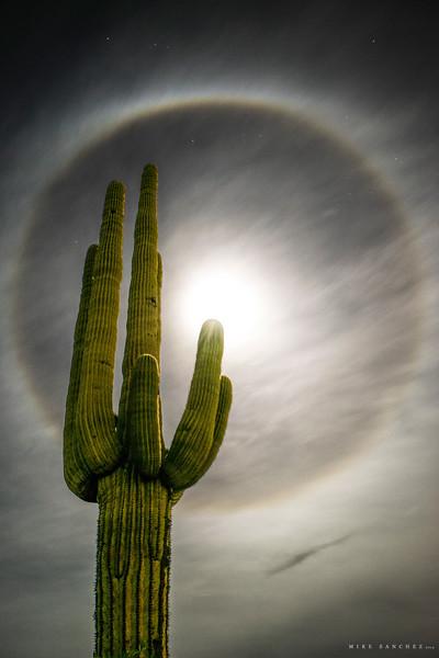 Desert Halo