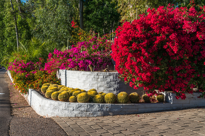 Entry-way landscaping - Pheonix, Arizona