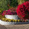 Entry-way landscaping - Pheonix, Arizona