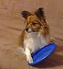 My Frisbee