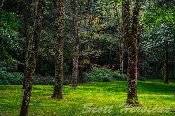 """A place to Unwind""<br /> <br /> This little patch of meadow is surrounded by woods. Actually located in a picnic area on the Blue Ridge Parkway, you really have to look to find this spot."