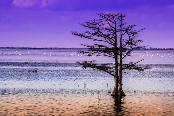 Cypress purple sky 2