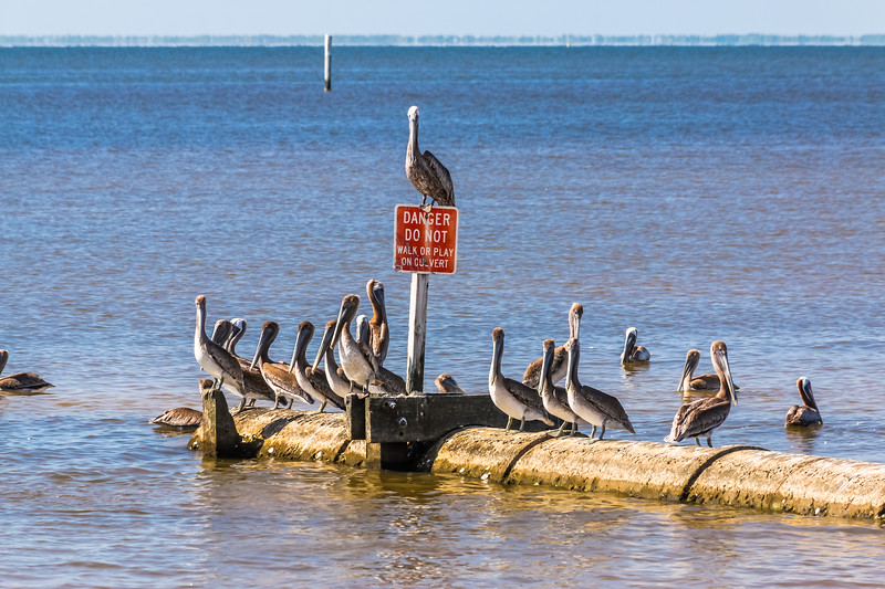 Pelican Party - Gulfport, Mississippi