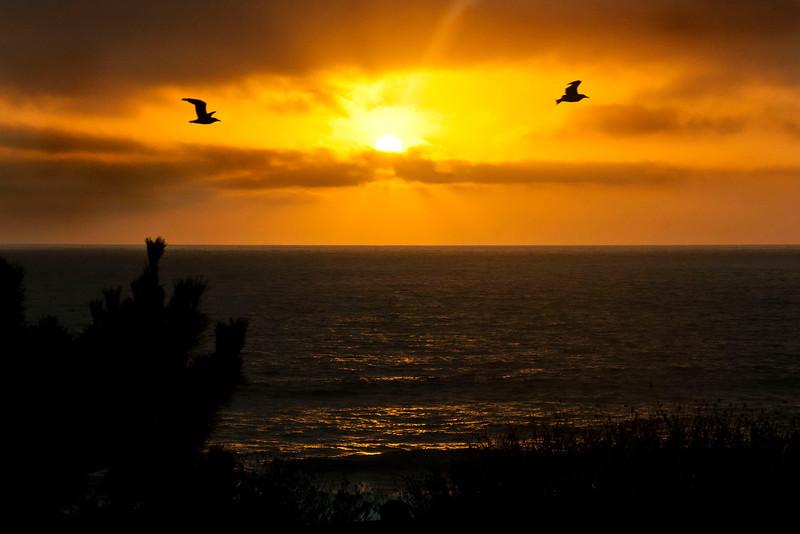 Seagull Bookends~<br /> <br /> Redondo Beach, Ca.
