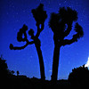 Speckled Sky~<br /> <br /> Joshua tree under blue, star-filled desert sky.  <br /> Joshua Tree National Park