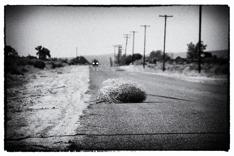 Avoiding Weed~<br /> <br /> Tumbleweed and approaching car<br /> Palmdale/Lancaster, Ca.
