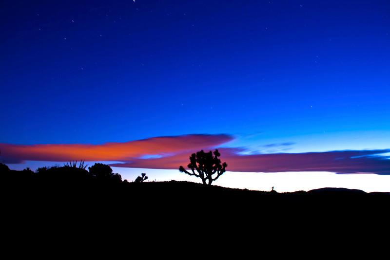 Hot Pink Sunset-<br /> <br /> Joshua Tree National Park