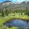 Grand Lake Moose