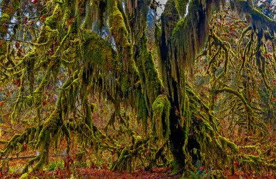 Hall Of Mosses II