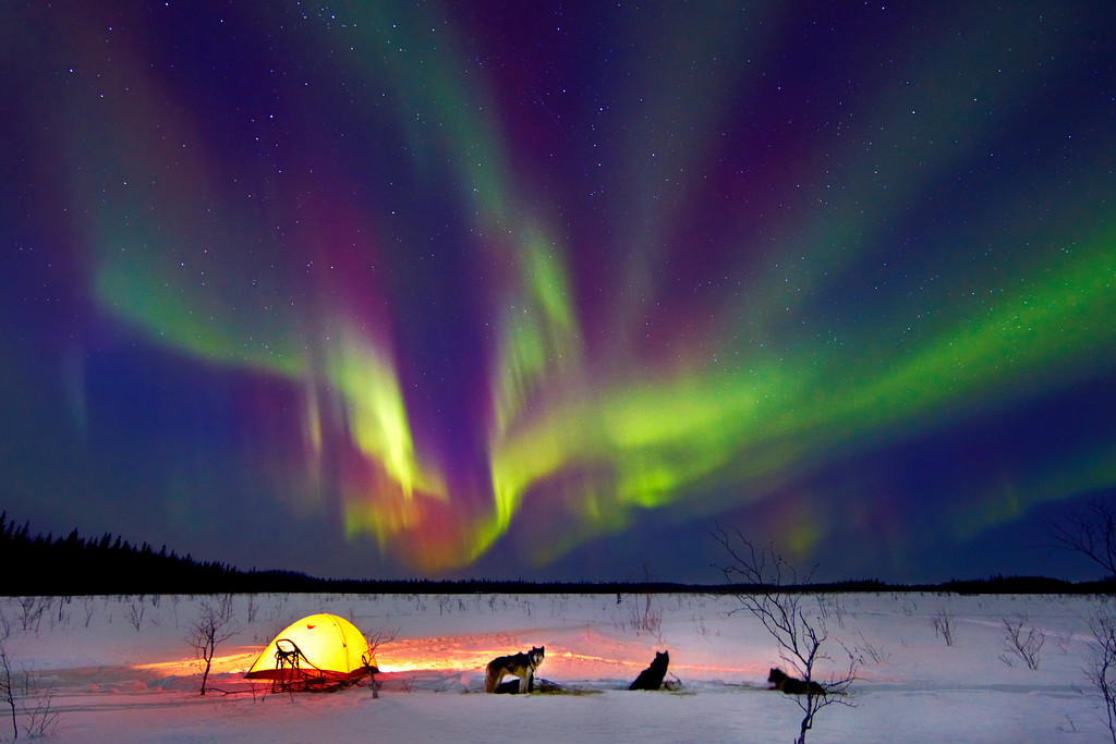 Northern lights with dog team and tent, Galena, Alaska.