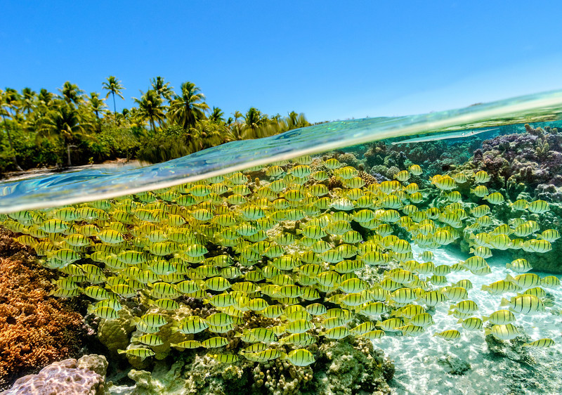 Snorkelling the waters of Le Taha'a, French Polynesia