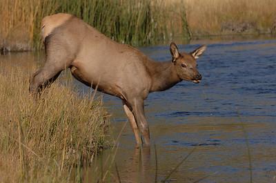 September - Elk