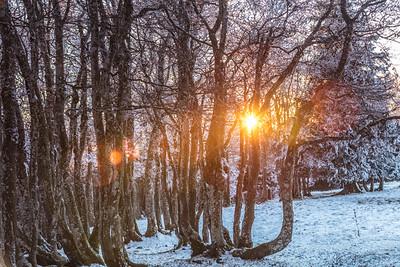 Winterwald am Grenchenberg