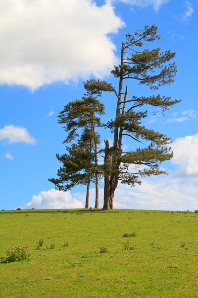 Group of trees standing alone in a field