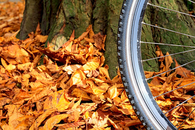 Mountain bike wheel and tire tread with autumn leaves