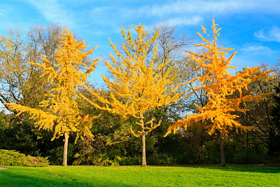 Three colorful autumn trees standing in a row
