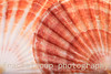 Macro View of Two Seashells