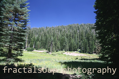 Meadow and Fir Trees in the High Sierra