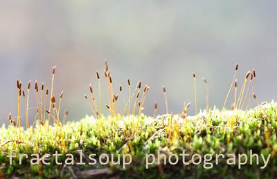 Moss Bloom Macro