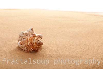 Conch Shell on the Beach at Sunrise
