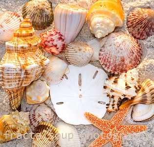 Collection of Seashells at the beach