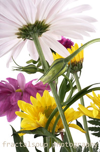 Closeup of Flowers from Low Angle isolated on White Background