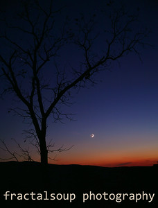 Bare Tree Silhouette at Sunset with Crescent Moon