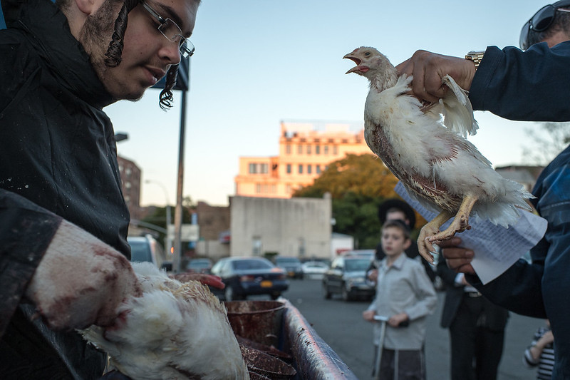 "Kapparot is an Orthodox custom in which the sins of a person are symbolically transferred to a chicken. The controversial Kaparos ritual takes place every year before Yom Kippur (the Day of Atonement) and is practiced in some Orthodox communities. First, selections from Isaiah 11:9, Psalms 107:10, 14, and 17-21, and Job 33:23-24 are recited; then a rooster (for a male) or a hen (for a female) is held above the person's head and moved in a circle three times, while the following is recited: ""This is my exchange, my substitute, my atonement; this rooster (or hen) shall go to its death, but I shall go to a good, long life, and to peace."" The hope is that the chicken, which is then donated to the poor for food, will atone the sins of the individual who takes part in the ritual, and thereby avert any punishment or misfortune. Brooklyn, New York"