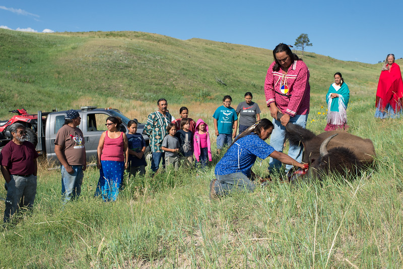 A sacred Buffalo (Tatanka) is bled during a Releasing of the Spirit Ceremony 2-days before Sundance, which is one of the Seven Sacred Rituals of the Lakota. Because of the Tatanka's great importance to the Lakota, a buffalo symbol or skull is present in all sacred Lakota rituals. The Tatanka stands as a symbol of self-sacrifice, as it gives until nothing is left, a trait that is found in the Lakota warrior. The Sundance signifies the cycle of death and rebirth. This ritual is performed as a sacrifice to help keep the world in balance and to ensure health and happiness within the tribe.