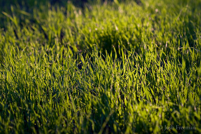 January 5, 2008  As Green as the Grass