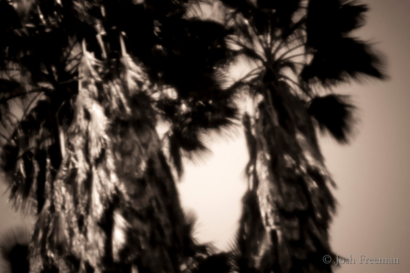 April 26, 2009<br /> <br /> Dramatic Palms<br /> <br /> Worldwide Pinhole Day, 2009