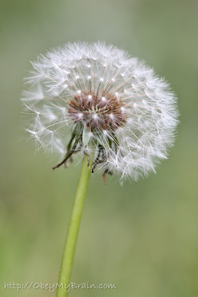 March 8, 2012 - Withheld by the Wind
