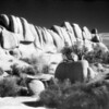 May 23, 2007<br /> <br /> IR film shot of Joshua Tree from a few years ago that I entered in this year's San Diego County Fair photography competition
