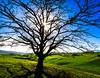 Winter. Tree. Waikato.