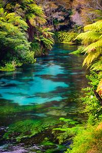 A Kaleidoscope of Colours Te Waihou Walkway Waikato