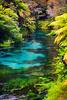 A Kaleidoscope of Colours<br /> Te Waihou Walkway<br /> Waikato