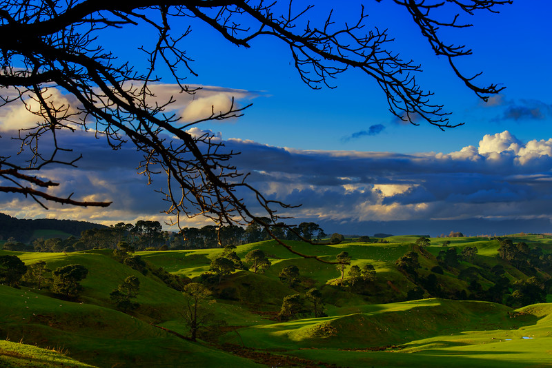 Waiting for The Spring<br /> Waikato