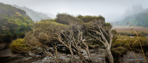 Trees with Grass and Mist Golden Bay New Zealand