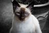 Frankie, my daughters designer cat.