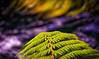 NZ Green With A Tabular Swirl