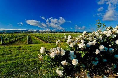 Vines & Roses Renwick