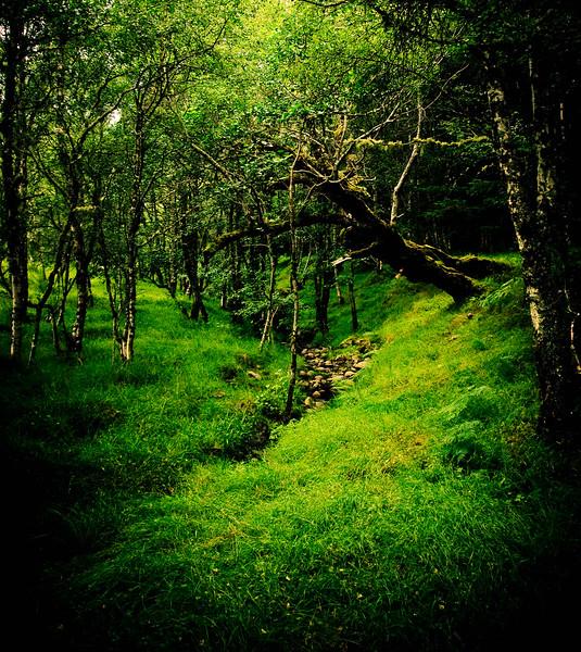 The Green Walk