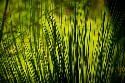 Shades of Green Native Forest Dwellingup Western Australia
