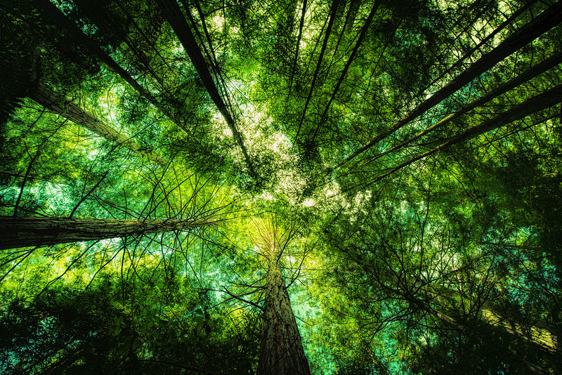 Then we looked up<br /> Redwood Forest<br /> Rotorua