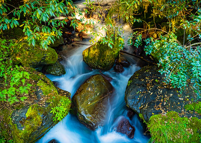 The Stream Running Fiordland New Zealand